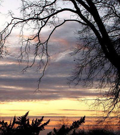 Sunsetandtree