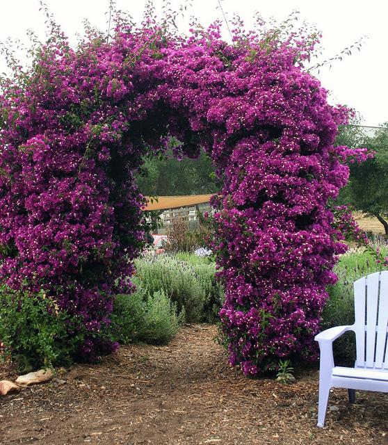 Kay ellen design spring fever for Arbustos en jardines