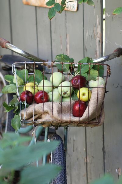 Bountiful Apples (Somerset) 2013